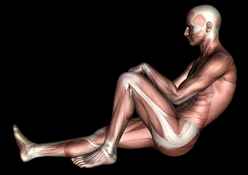 Algunas-curiosidades-sobre-el-cuerpo-humano-que-quizás-no-sabías