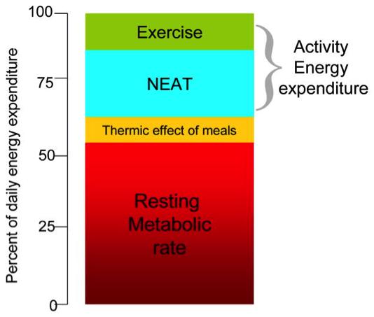 NEAT_graph