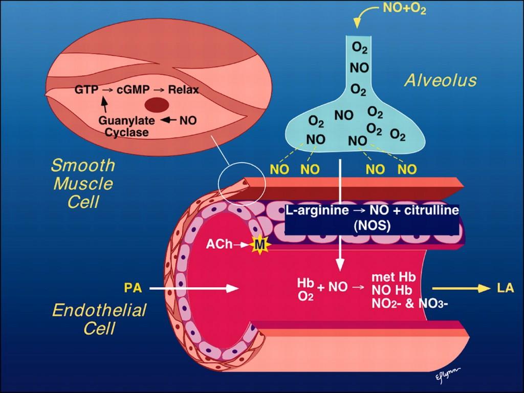 oxido-nitrico-descripcion
