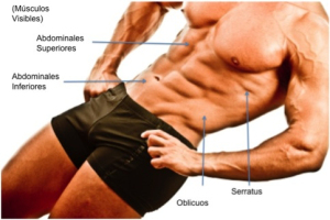 abdominales sup-inf
