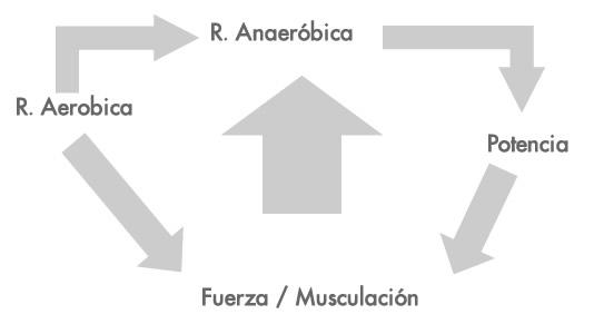 fuerzaymusculacion