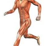 NOTIGYM: El cuerpo del deportista al completo